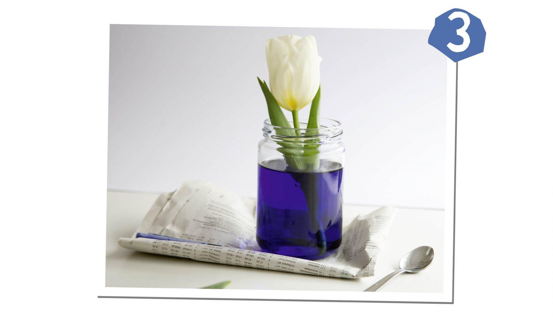 Blume ins gefärbe Wasser stellen